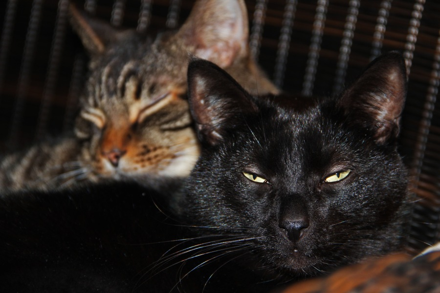 Ha, I am the star in this one! Bagheera