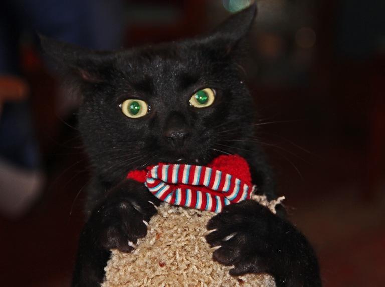 Capture the ornament- success!