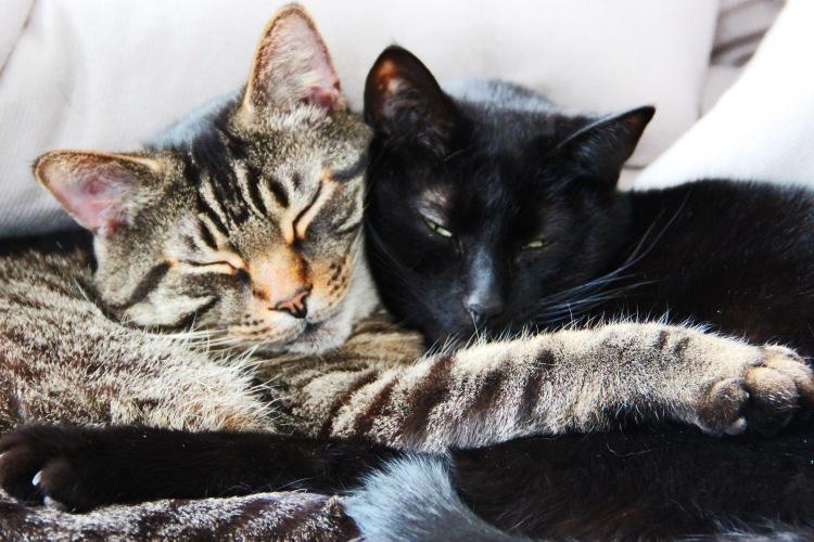 Cat Love No. 2