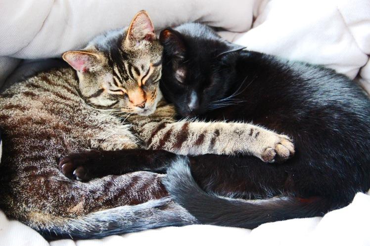 Cat Love No. 1
