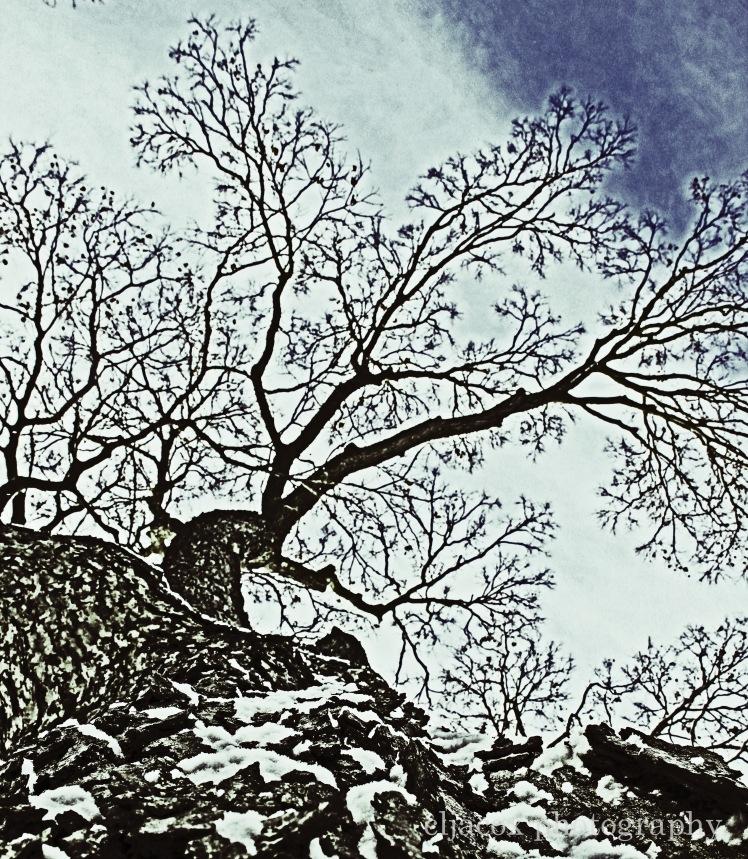 Tree copyWM