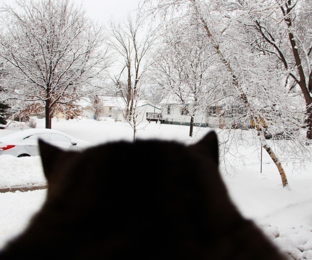 Dylan looks at snow