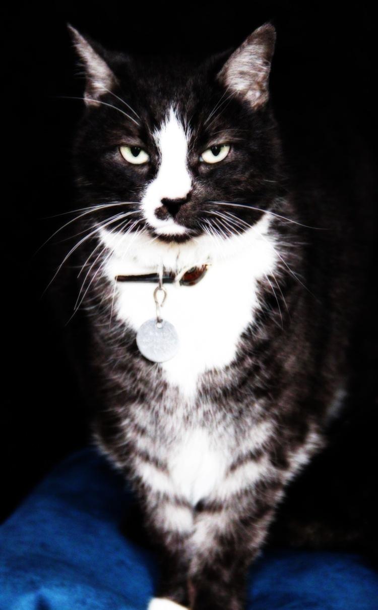 Minnie had professional portrait