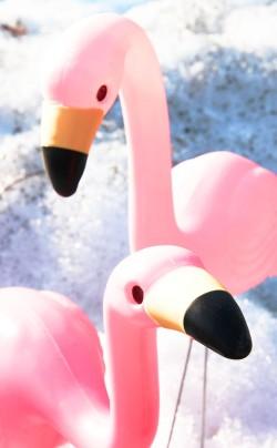 Flamingos in snow