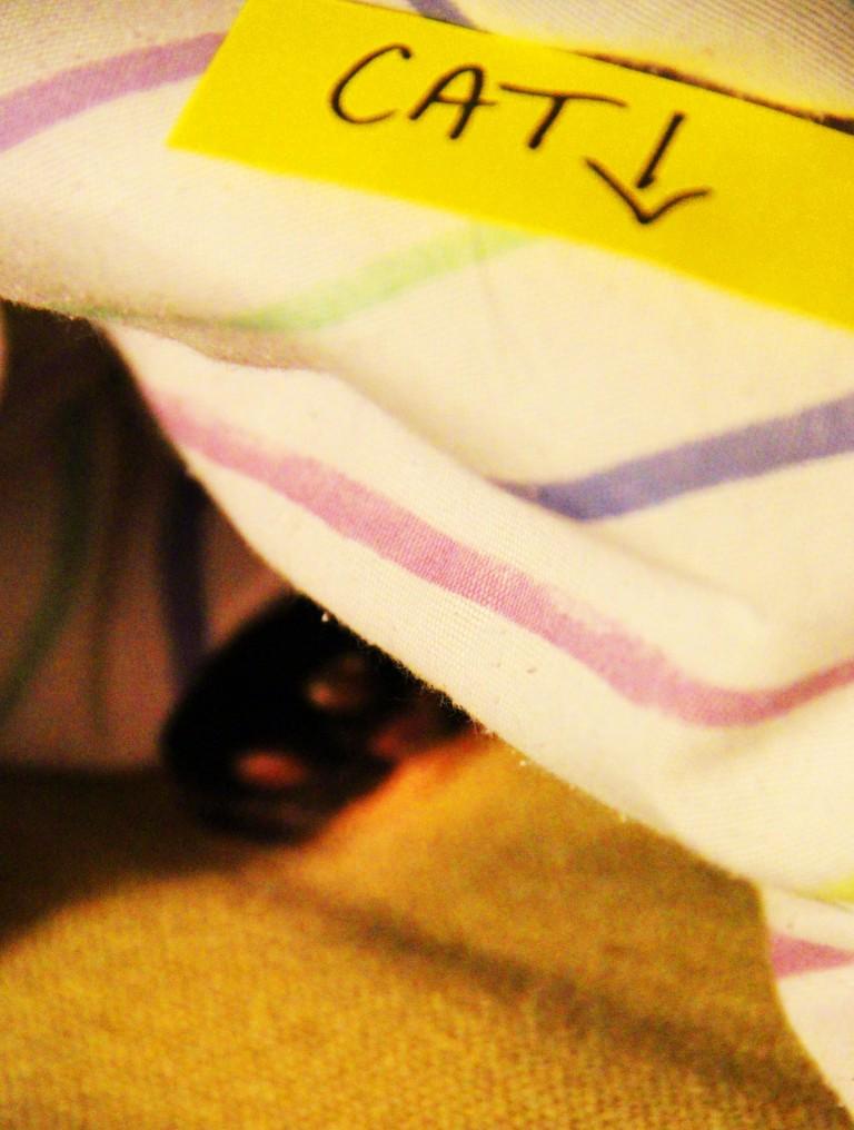 bug in blanket