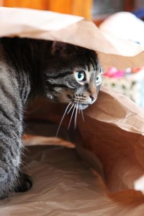 Wrap me to go, please...