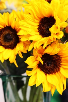 sunflowers - Copy