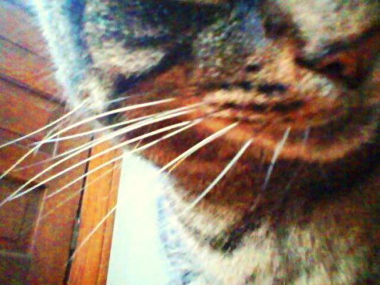 Dylan via Snapcat
