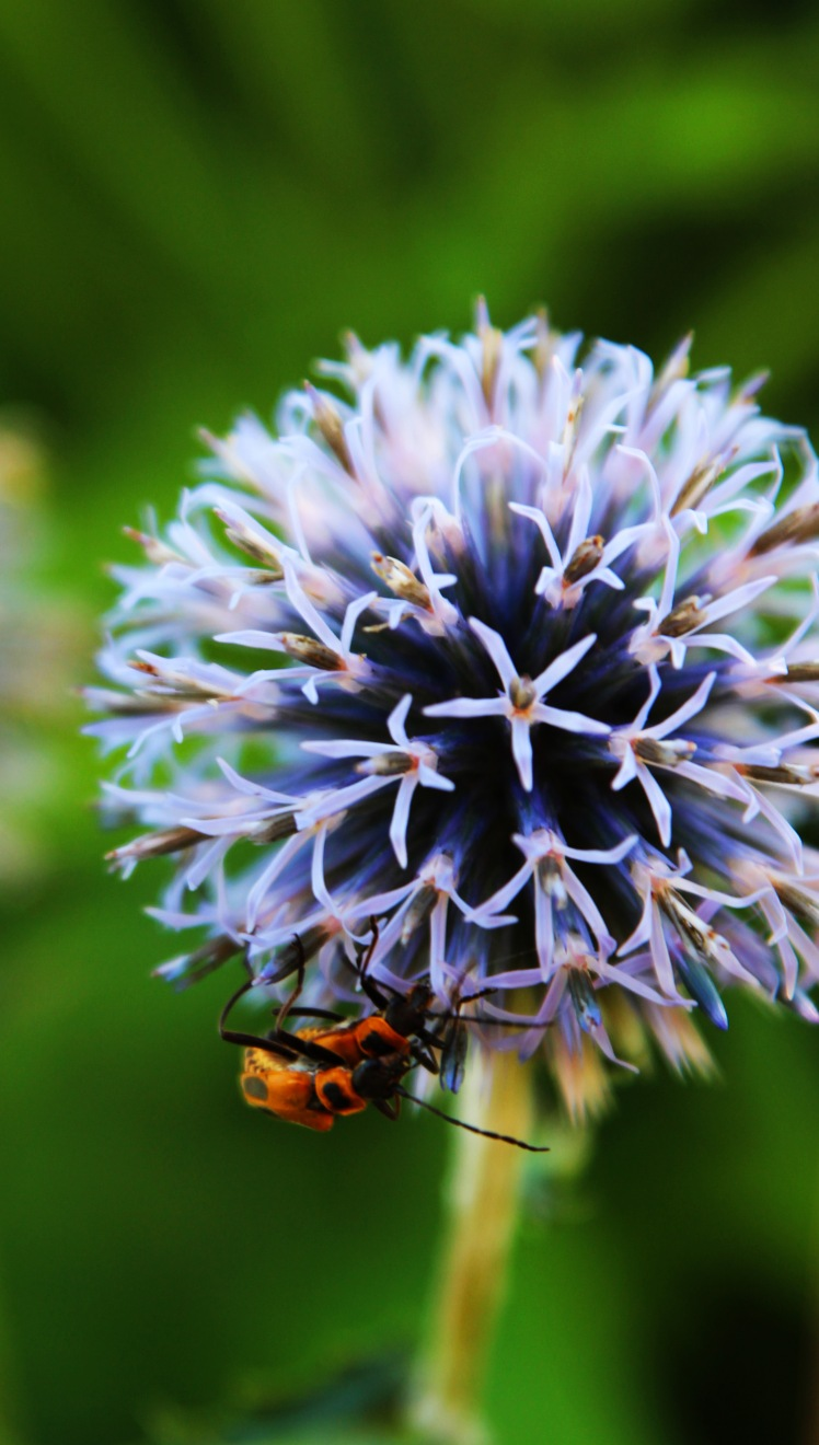 thistle and bugs