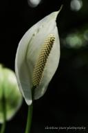 delicate conservatoryWM
