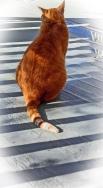 Pumpkin Pie, resident cat at Chestnut street Inn