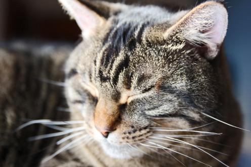 Sweetly snoozing...