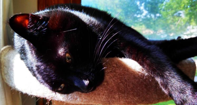cropped-bagheera-thursday-morning.jpg