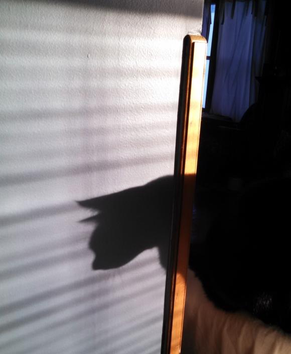 bagheera shadow