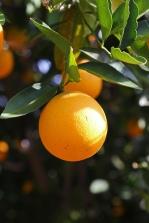 oranges, hummingbirds, splashing water
