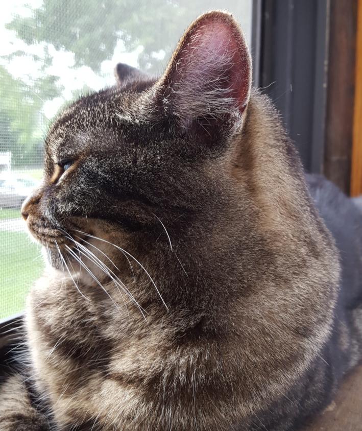Dylan porch window