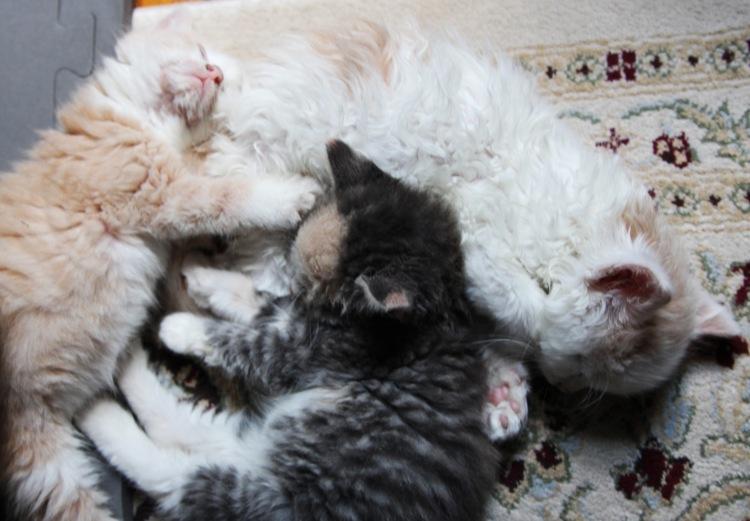 kitten pile2