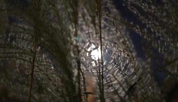 moon-better