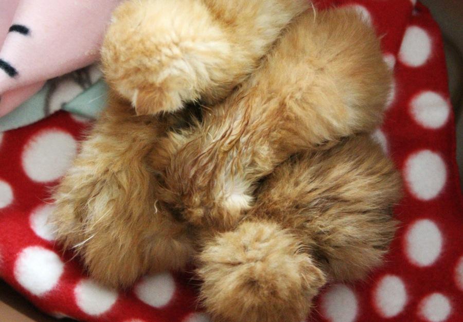 After bath kitten pile