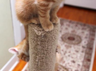 cat tree2