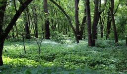 Crosby woods