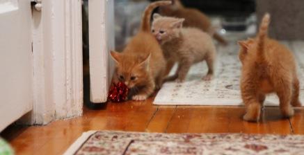 hallway e sneak attack