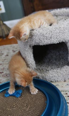 kitten room a