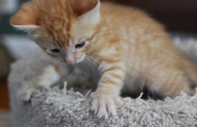 kitten room b