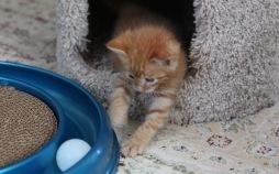 kitten room e
