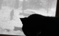 caturday storm April 18