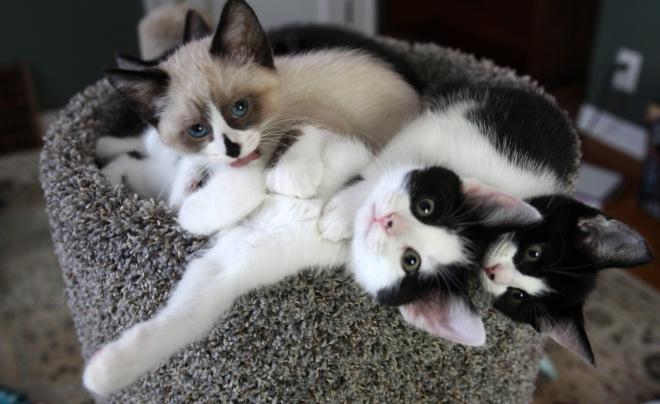 cat pile6