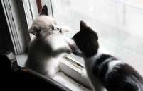 cora and rory kitten play2 the windup