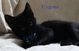class photo cygnus_edited-2