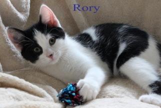 class photo rory_edited-1