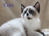 Cora 2018 class photo