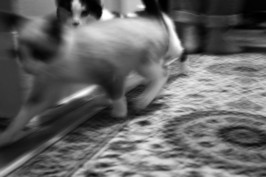 speed kitties