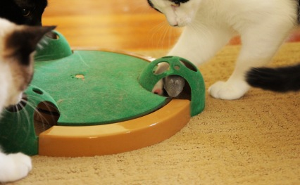 move along mouse