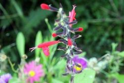 mysterious wildflower3