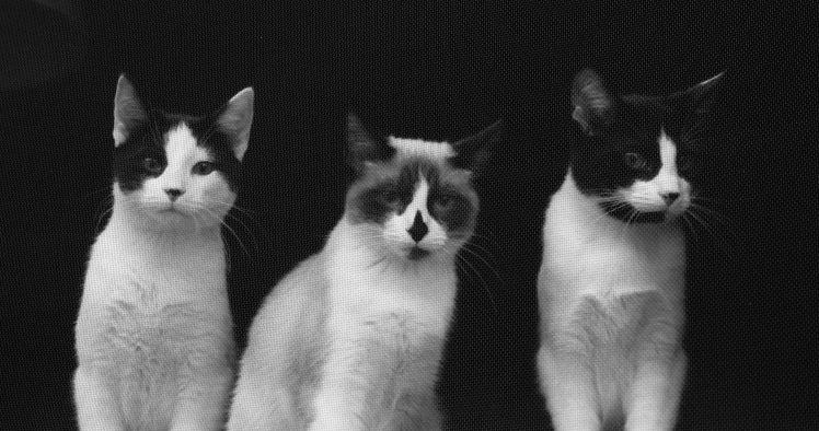 trio through the screen3